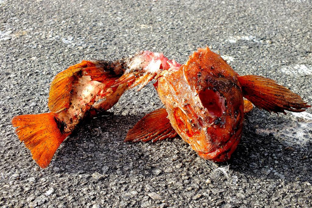 verdorbener fisch photo